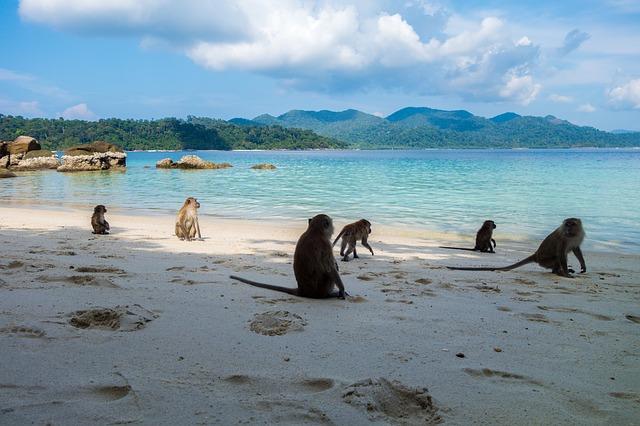 8 Curiosidades sobre Tailandia   Rutas Salvajes   Viajar Solo en Grupo Organizado